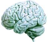 Alimentaci n para el cerebro - Alimentos que contienen silicio ...