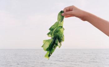 Las Algas como complementos