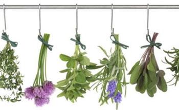 Las propiedades de las plantas