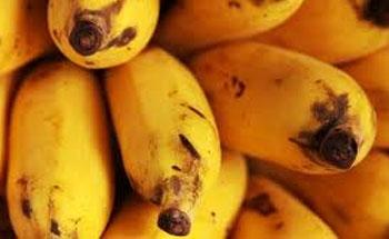 Propiedades y usos de la banana
