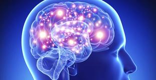 Alimentación para el cerebro