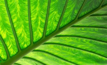 10 plantas esenciales para el otoño