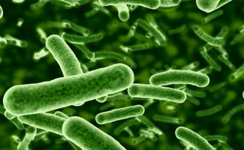 ¿Qué sabemos sobre la bacteria E. Coli?