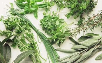 Hierbas arom ticas for Plantas aromaticas para cocinar