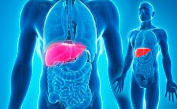 El hígado y nuestra alimentación, parte I