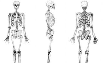 Alimentos contra los huesos frágiles