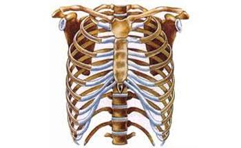 Alimento para los huesos