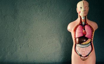 La importancia del limpiar el intestino