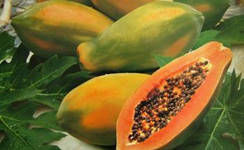 La papaya y sus enzimas digestivas
