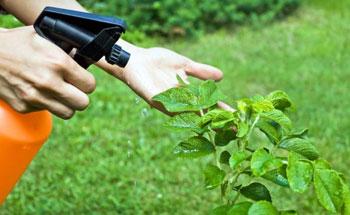 Pesticidas en los alimentos: lo que hay que saber