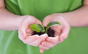 Plantas que curan  - Parte I