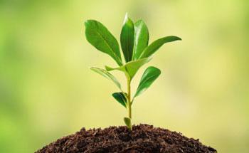 Plantas que curan  - Parte II