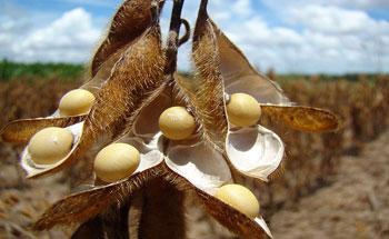 La soja: valor nutritivo y utilización