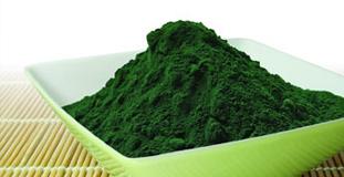 Alga Spirulina: funciones y efectos prácticos