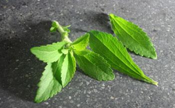 La Stevia, sustituto natural del azúcar