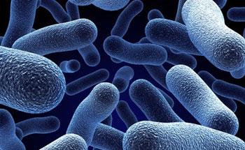 Virus, bacterias y parásitos que nos enferman